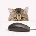 ONLINE PET FOOD SALES POISED FOR SIGNIFICANT GROWTH? (www.petfoodindustry.com)