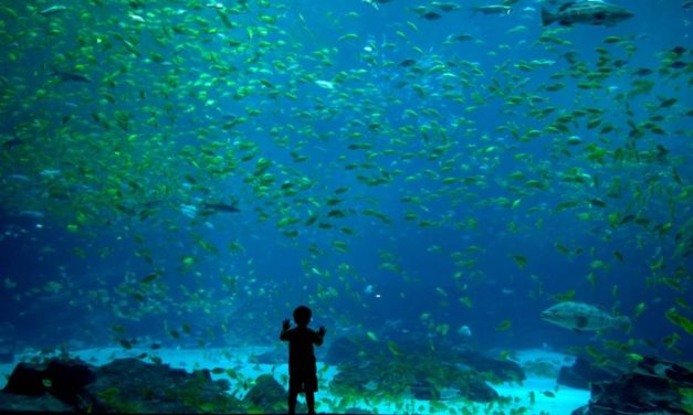 TIPS FOR FAMILY TRIPS TO ZOOS AND AQUARIUMS