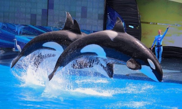 TripAdvisor to End Ticket Sales to Attractions Featuring Captive Marine Mammals