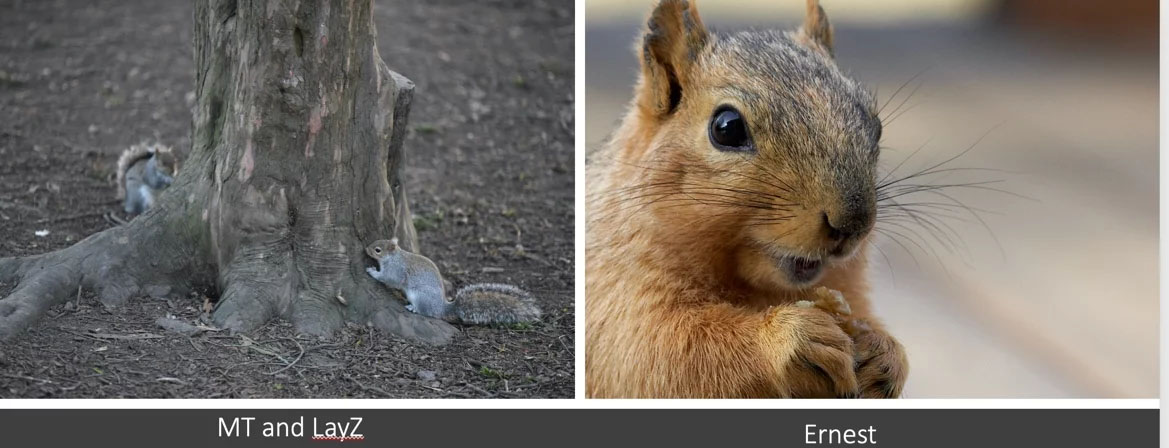 A Tale of 3 Squirrels and Their Human Counterparts in Sales