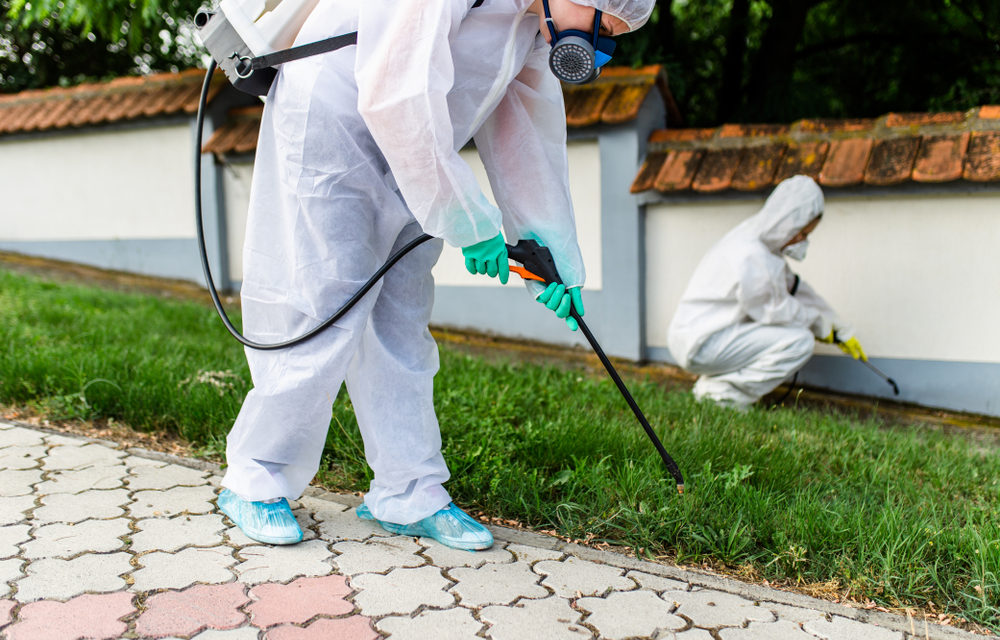 Advertising Strategies for Exterminating & Pest Control Services 2020