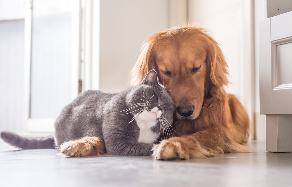Pet Products & Services Market 2020 PLUS