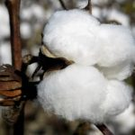 Cotton Prices Just Hit a 10-Year High. Here's What That Means for Retailers and Consumers